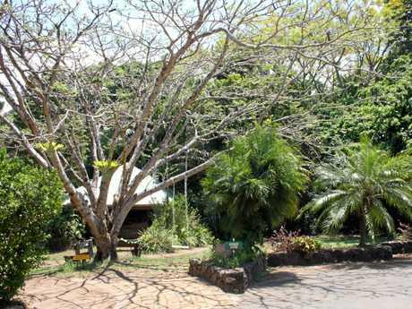 Tanglewood Gardens, MapletonPhoto: Erle Levey / Sunshine Coast Daily