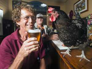 Chooky the chicken, pet of publican Keryn Payne, enjoys a beer with local Greg 'Rooster' Friend in the main bar at The Appollonian Hotel at Boreen Point.