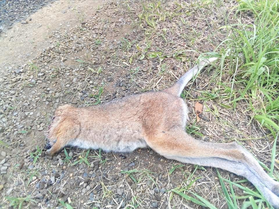 This photo of a decapitated joey was posted in the Nimbin Hook Ups Discussion Board Facebook page.