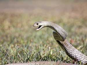 Woman bitten by snake on private property