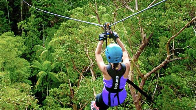 The Sunshine Coast could be home to the TreeTop Challenge, if an application before the Sunshine Coast Council is approved.
