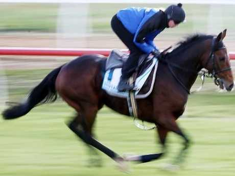 Red Cardinal works on the grass at Werribee. Picture: Michael Klein