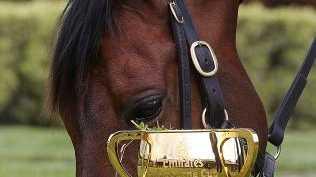 2016 Melbourne Cup winner Almandin. Picture: Ian Currie