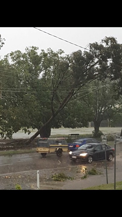 Powerlines rest in trees on Boundary St near the south state school.