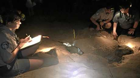 BACK AGAIN: Rangers Lauren Engledow, Kelly Green and Nicole Murnane record data from a turtle on Monday night. She first nested at Mon Repos in 2005, and returned to lay eggs in 2008 and 2012.