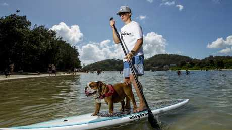 Dan paddle boards with Sergeant the bulldog. Picture: Jerad Williams