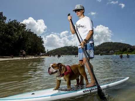 Dan paddle boards with Sergeant the bulldog. Picture: Jerad Williams