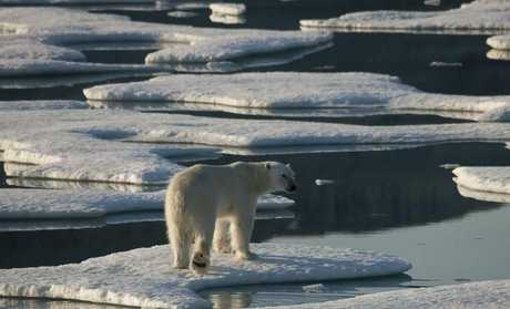 A polar bear photographed in drifting sea ice in Kane Basin, off Cape Clay, in northern Greenland.
