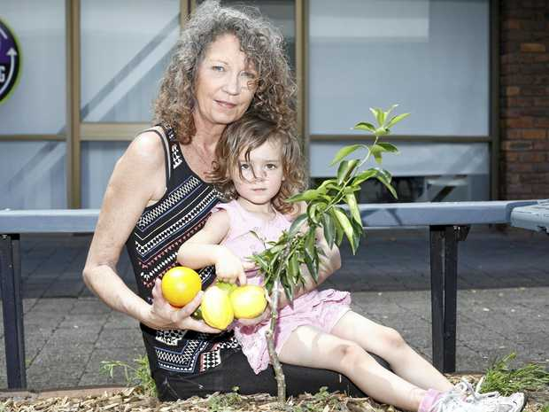 NURTURING A COMMUNITY: Karen Halliday, from It Takes a Town, and granddaughter Estelle Gravenall look forward to the fruit tree trail proposed for Murwillumbah.
