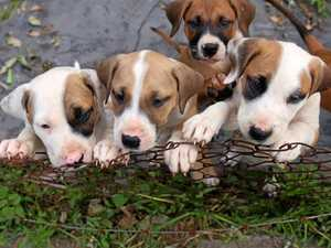 Six puppies dumped during storm now named and will be adopted