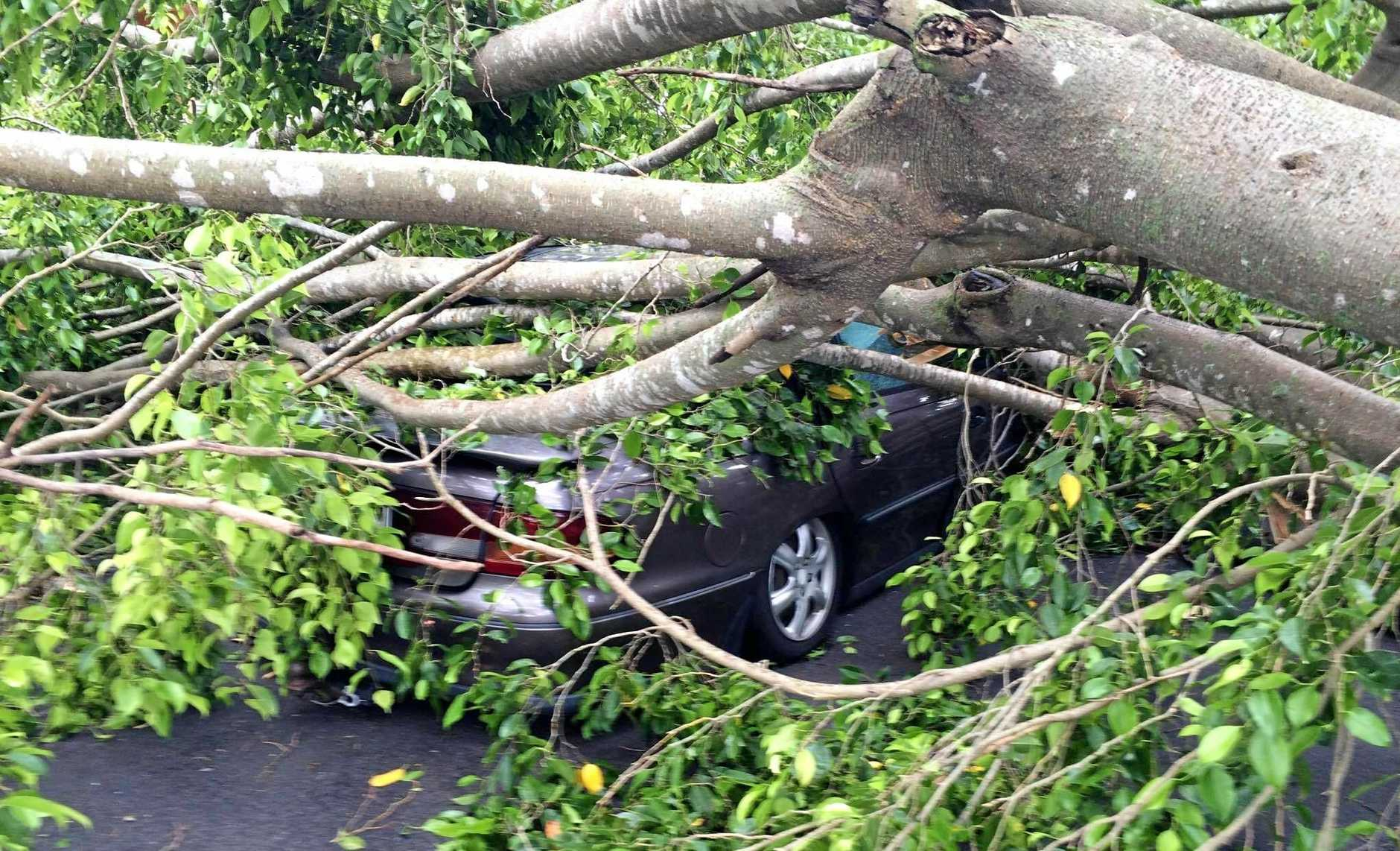 A car is trapped under a tree on Woongarra St after yesterday's freak storm brought trees and roofs down across the region.