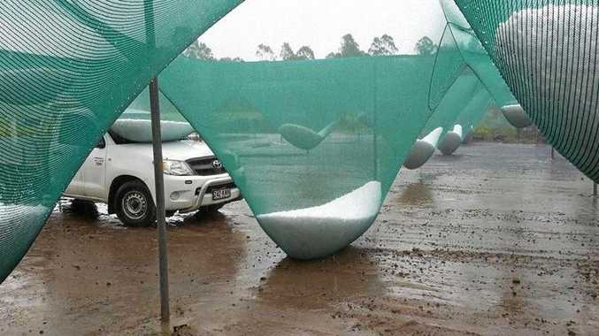 HAIL stones distended shade covers in a Noosa hinterland car park on Tuesday afternoon.