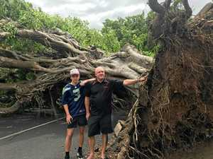 Miracle escape as massive 25m tree falls on car