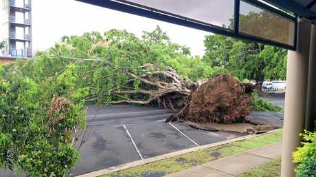 A large tree has come down outside the Centrelink offices on Woongarra St.