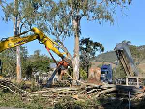 Tree clearing laws on election agenda
