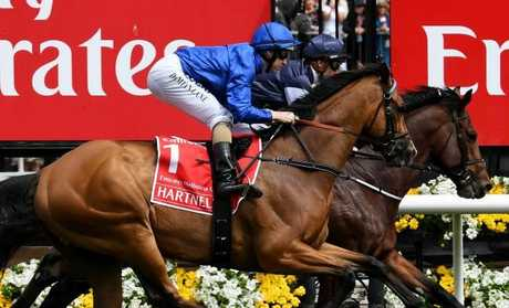 Hartnell ridden by Damien Lane was at the wrong end of the Melbourne Cup field.