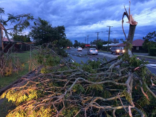 Trees down on Elliott Heads Rd after storms sweep through Bundaberg.