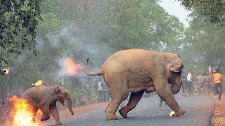 Biplab Hazra's award-winning photo titled Hell is Here. Picture: Biplab Hazra/Sanctuary's Wildlife