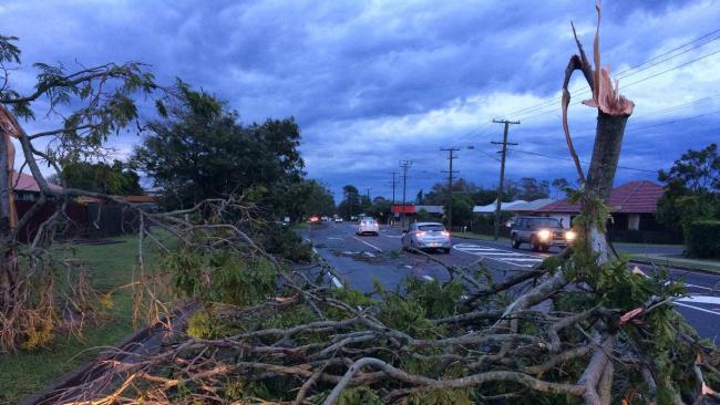 The storm in Bundaberg on Tuesday brought down trees on Elliott Heads Rd.