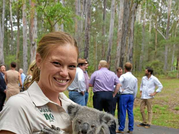 A cute and cuddly VIP at the Noosa koala land acquisition announcement.