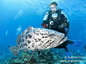 Coral Sea diving trip of a lifetime