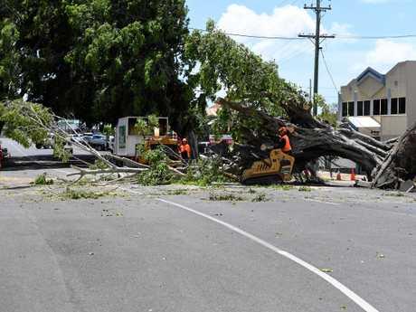 Tree clean-up in Woondooma Street.