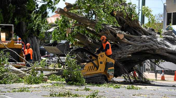 Workers clear the massive tree on Woondooma St.