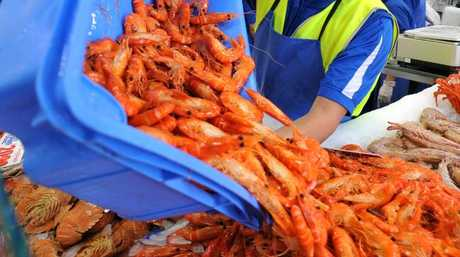 Retailers expert prawn price to soar past $50 a kilo. Picture: Joel Carrett.