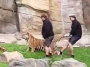 Dreamworld handlers accused of mistreating Tigers