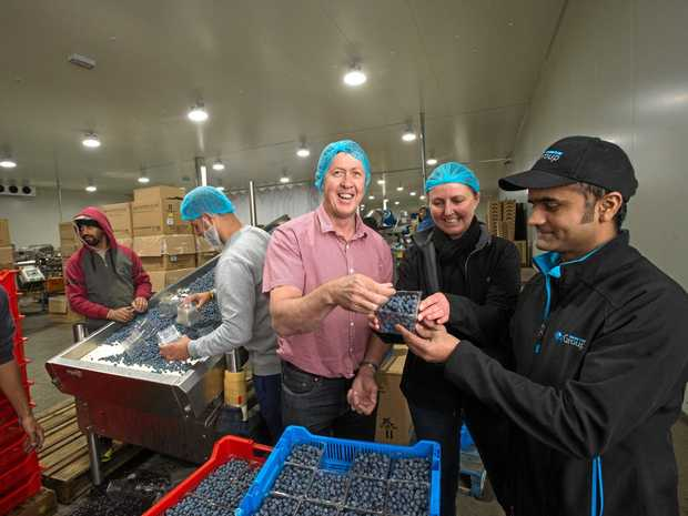 EXPORT MARKET: Oz Group Coffs Harbour blueberry industry workers with Cowper MP Luke Hartsuyker and Oz Group's Sussan Marshall and Sarabjot Singh at the Coffs Harbour packing facility this week.