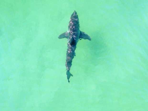 Shark nets will be deployed again ahead of swimming season.
