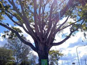 UPDATE: Greens say sign nailed to tree is 'tree-friendly'