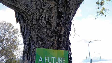 BAD LOOK: A Greens election sign has been nailed into a tree at Gin Gin, raising the eyebrows of community members.