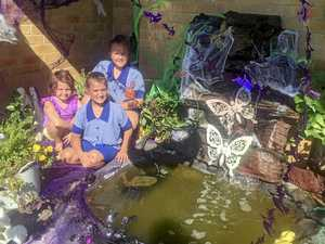 Jacaranda lawn display impresses