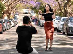 Sydney suburb considers hosting a jacaranda festival