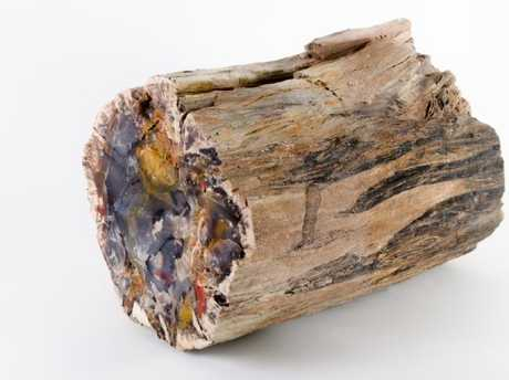"""One of the pieces of petrified wood that had been returned by a """"cursed"""" thief. Picture: Ryan Thompson/badluckhotrocks.com"""