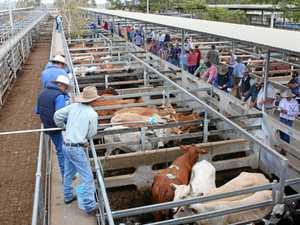 CQ market report: Weaner steers reach 412c