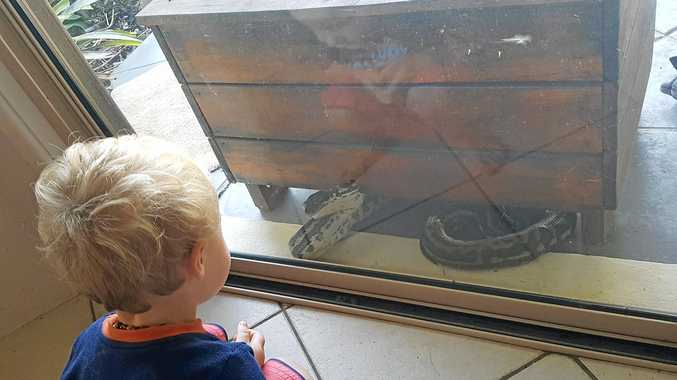 SNAKES ALIVE: Nambour mother-of-two Megan Manley barricaded herself inside her home in fright after getting paid a visit from this monster python.