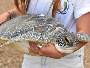 GALLERY: Mia the turtle is another success story for centre