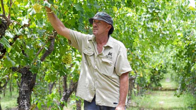 St George table grape producer Richard Lomman is one of many local growers who are struggling with low prices for this season's harvest.