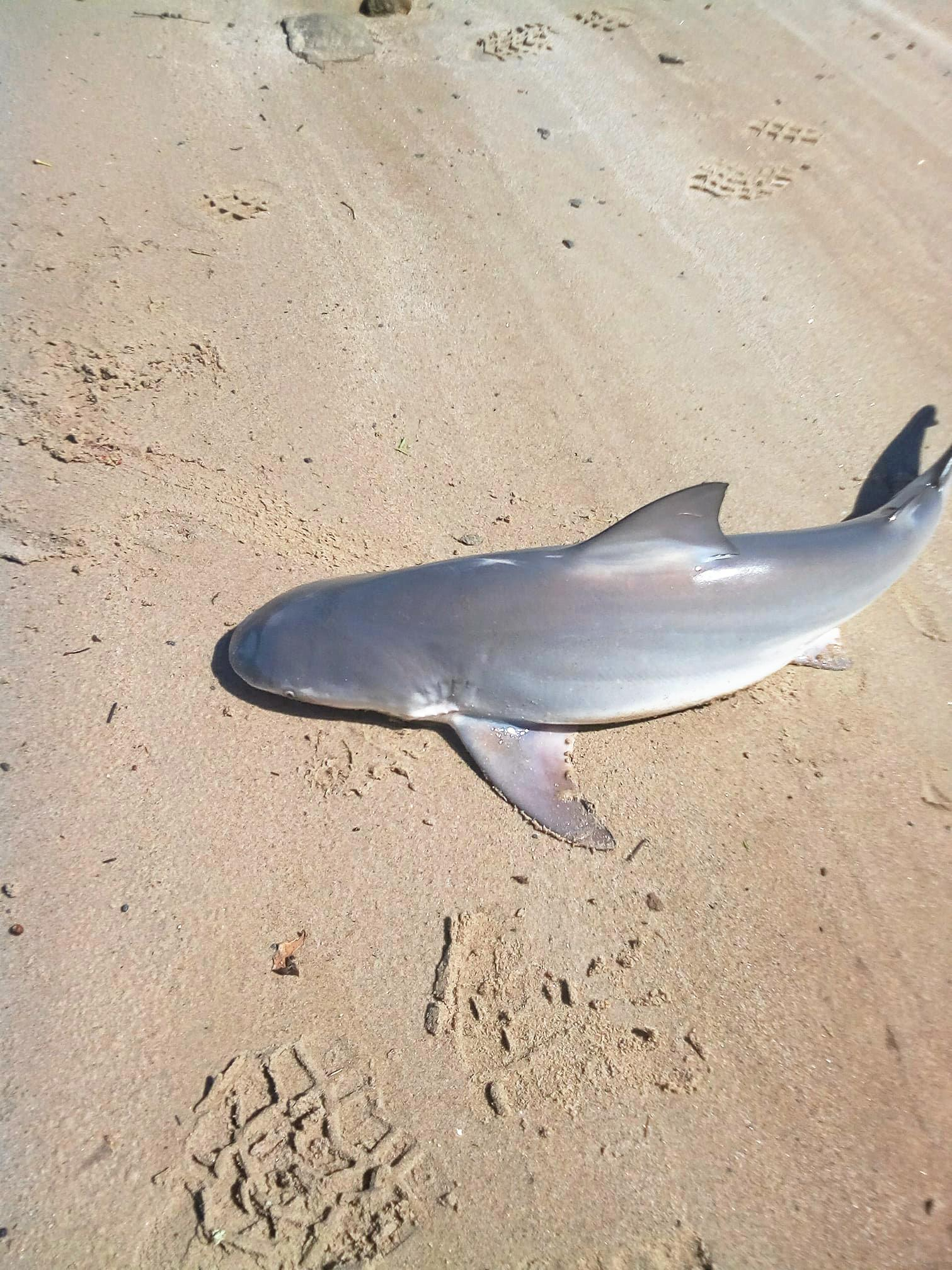 Julie Creed posted this photo of a shark found in the Richmond River at Coraki.