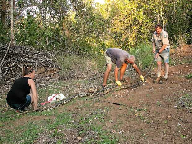 Measuring the 4.6 metre python caught at a Cannon Valley residence last week.