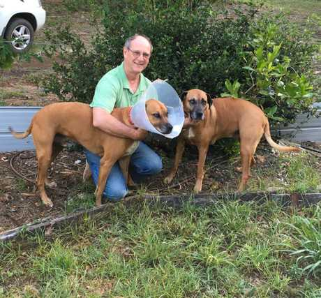 PET PROTECTION: Alan Corbett with his two 40kg ridgeback cross companion animals, Kim and Gypsy.
