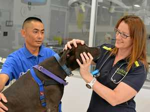 Gatton vet nurse achieves PhD
