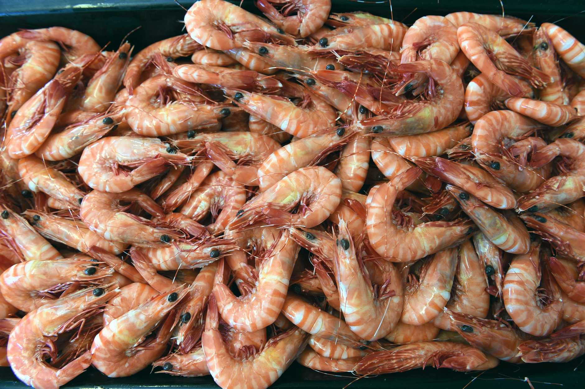Dan Greenhalgh from Urangan Fisheries with a tray of fresh prawns.