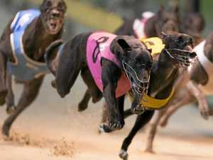 20 extra greyhound races a year in Lismore
