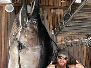 'Could've nearly fit in its mouth': Massive marlin landed