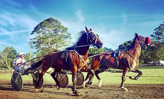 HOT TO TROT: Trotting races will be part of the 120th Bangalow Show this weekend.