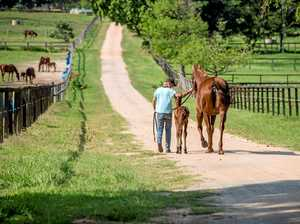 Outstanding equine centre goes up for sale