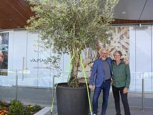Tree to grow in new Mediterranean restaurant